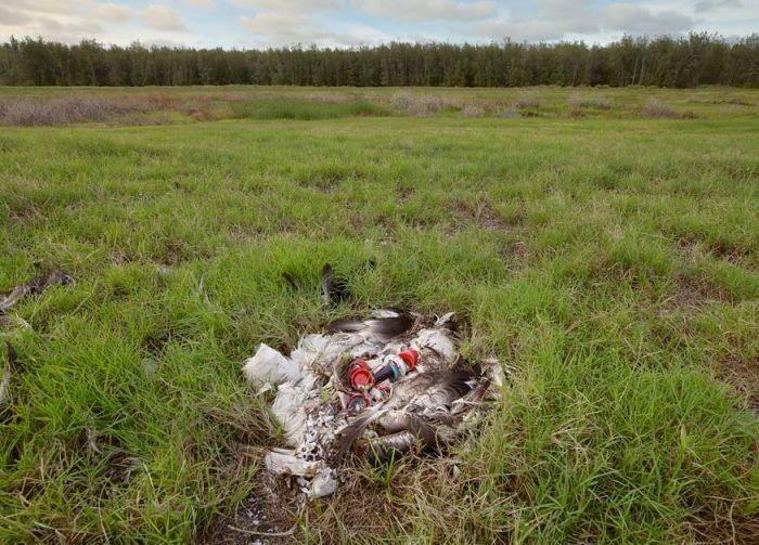 Почему умирают птицы