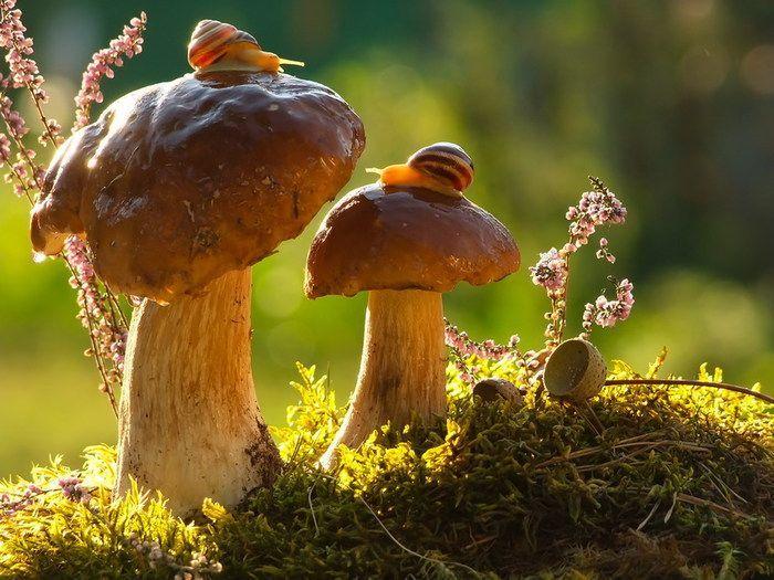 Сказочные макро-снимки живой природы