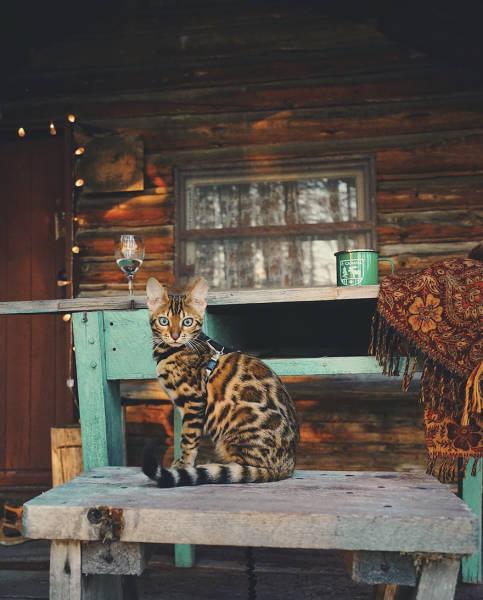 Кошка-путешественница из Канады