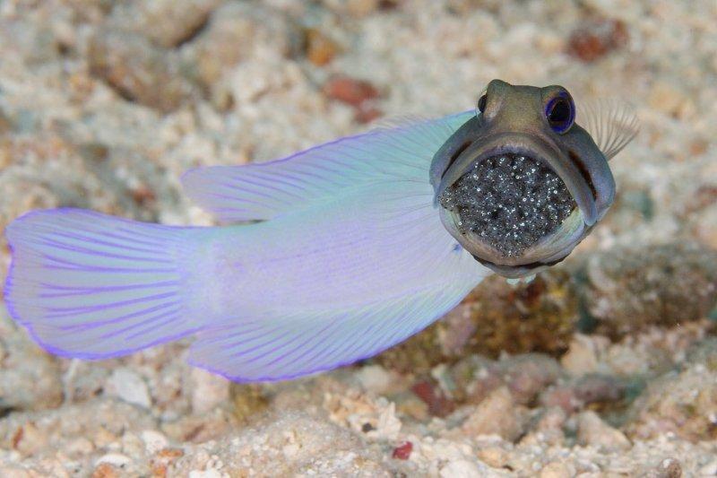 Подводный мир в объективе или снова глубинные твари
